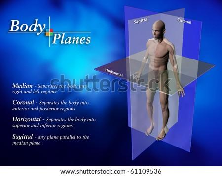 Body Planes - stock photo