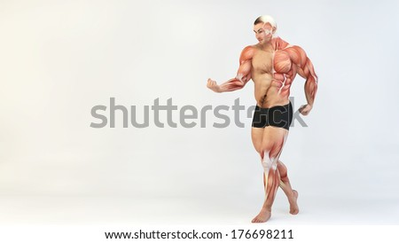 Bodybuilder body  - stock photo