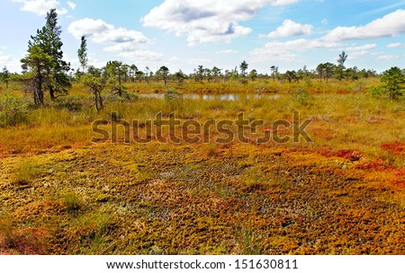 Bog at the Kemeri national park. - stock photo