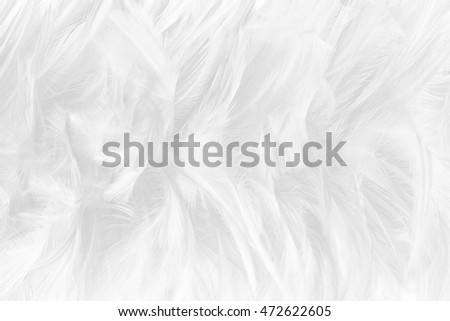 Bohemian boho style vintage color trends ,Chicken feather texture background,Interior soft luxury gray heaven angels,Modern image used for fashion design living room,office and others