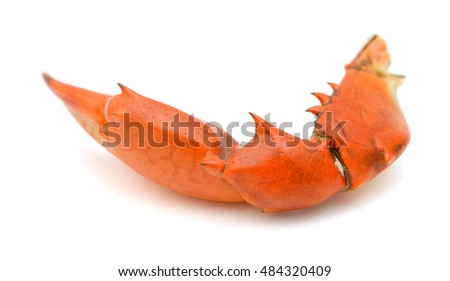 Boiled claw crab at corner. Isolated on white background