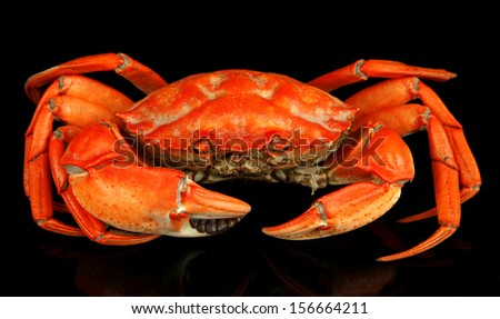 Boiled crab isolated on black - stock photo