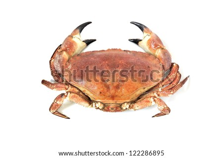 Boiled crab isolated on white background - stock photo