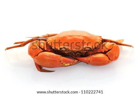Boiled crabs prepared - stock photo