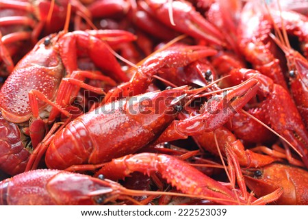 boiled crawfish clayfish party - stock photo