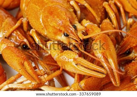 Boiled Crayfish, CloseUp as Background - stock photo
