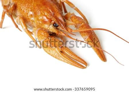 Boiled Crayfish, Isolated on White Background - stock photo