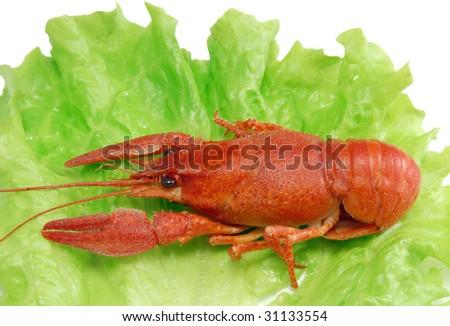 Boiled crayfish on lettuce - stock photo