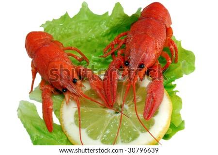 Boiled crayfishs on lettuce and lemon - stock photo