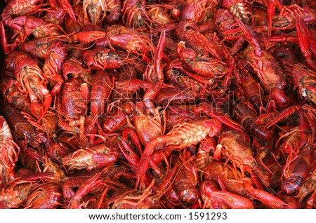 Boiled or steamed crawfish - stock photo