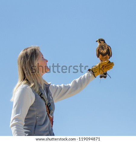 BOISE, IDAHO - OCTOBER 7 : Unidentified trainer at World Center for the Birds of Prey holds a peregrine falcon on October 7, 2012. - stock photo