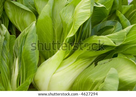Bok Choy, Chinese Cabbage, at farmer's market. - stock photo