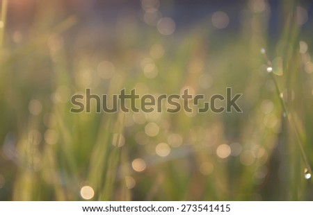 Bokeh background of foliage. Nature composition. - stock photo