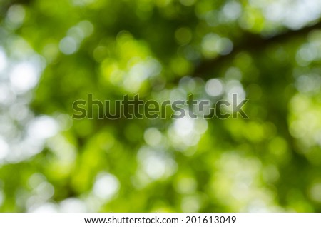 bokeh from tree - stock photo