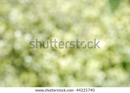Bokeh plants.  Horizontally framed shot. - stock photo