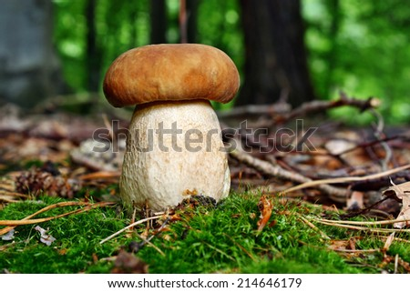 Boletus edible mushroom in the forest