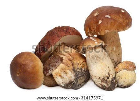 boletus edulis isolated on white background. Wild Foraged Mushroom - stock photo