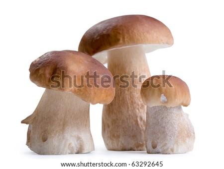 Boletus Edulis mushroom isolated on white background - stock photo