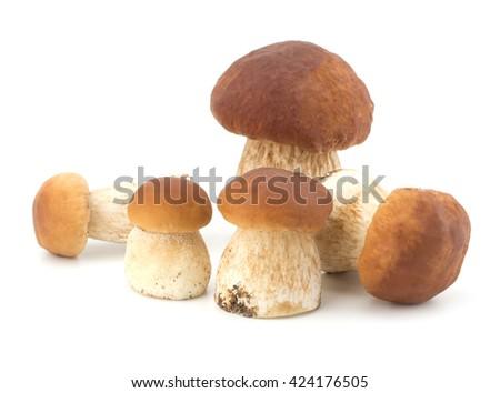 Boletus edulis mushroom isolated on white background close up - stock photo