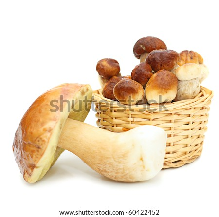 Boletus Edulis mushrooms in straw basket isolated on white background. - stock photo