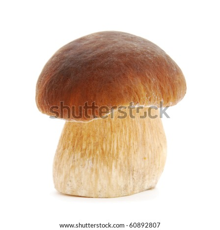 Boletus edulis on white background - stock photo