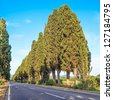 Bolgheri famous cypresses trees boulevard landscape. Maremma landmark, Tuscany, Italy, Europe. This boulevard is famous for Carducci poem. - stock photo