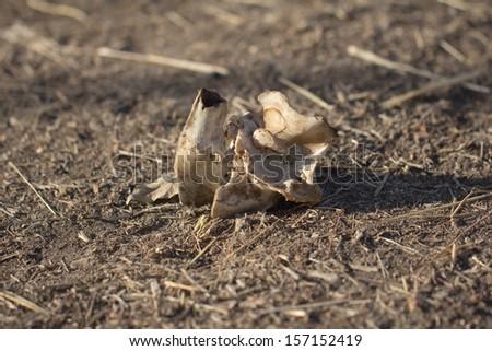 bone on the ground - stock photo