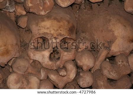 bones - stock photo