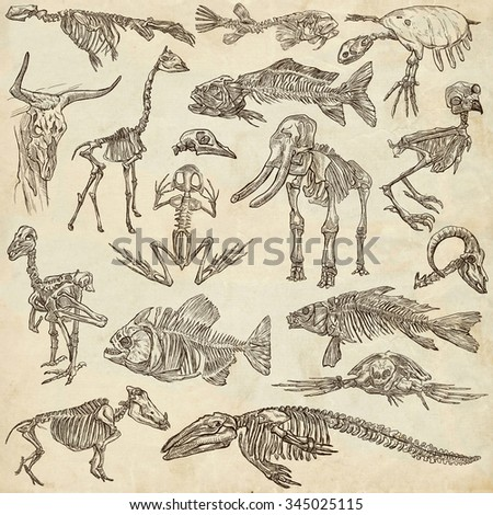 Bones and Skulls of different Animals - Collection of an hand drawn illustrations. Full sized hand drawn illustrations, Originals, freehand sketching, drawing on paper background. - stock photo