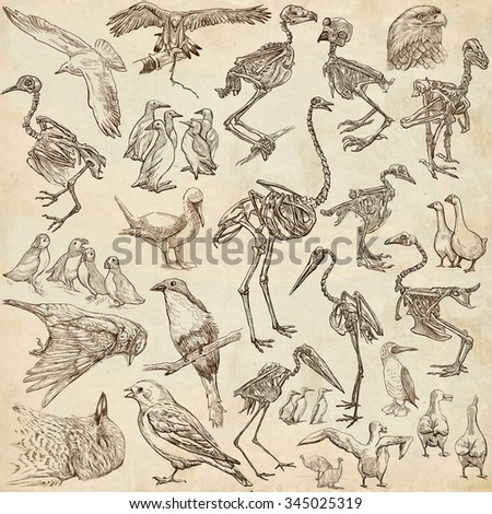 Bones, Skulls and Living Birds - Collection of an hand drawn illustrations. Full sized hand drawn illustrations, Originals, freehand sketching, drawing on paper background. - stock photo