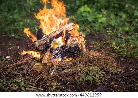 bonfire, halt forest