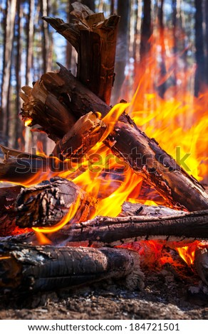 Bonfire in the fores - stock photo