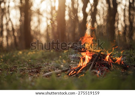 Bonfire in the forest in the evening - stock photo