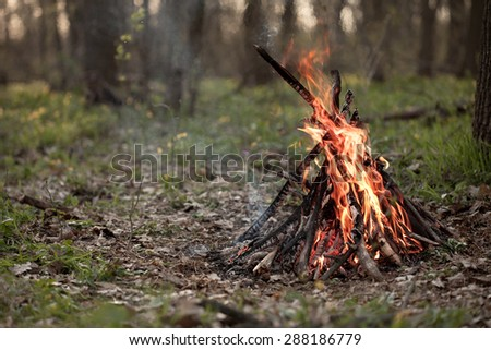 Bonfire in the forest. Shallow depth of field. - stock photo