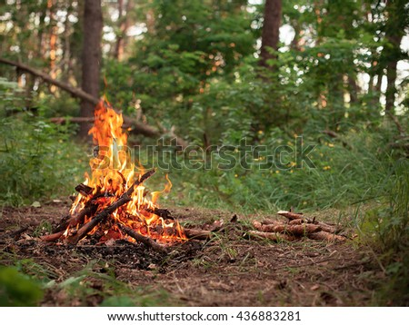 Bonfire in the middle of the forest
