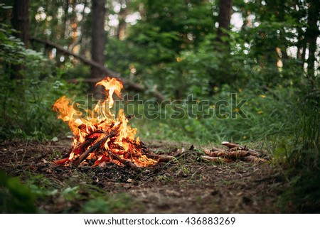 Bonfire in the middle of the green forest. Shallow depth of field