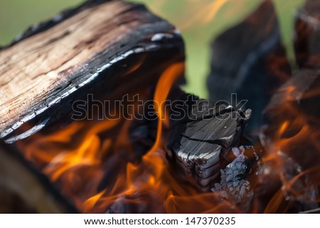 Bonfire, wood and fire in the camp on the nature of the close-up