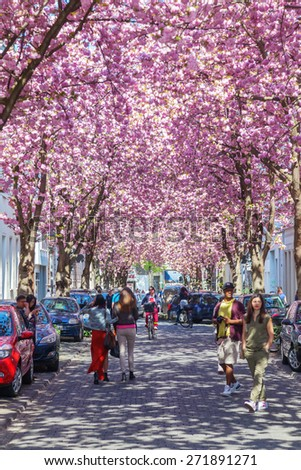 BONN, GERMANY - APRIL 21, 2015: street with cherry blossom in the old town of Bonn with unidentified people. Under the famous alleys with cherry blossom, the streets in Bonn are on 10th position - stock photo