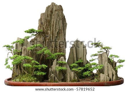 bonsai - stock photo