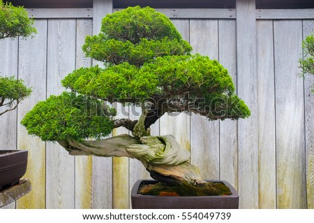 Bonsai and Penjing landscape with miniature evergreen tree in a tray