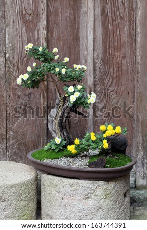 bonsai flower and tree in a ceramic pot - stock photo