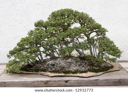 Bonsai Gathering of Trees - stock photo