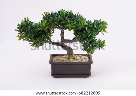 Bonsai in front of White background