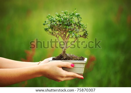 bonsai in hands - stock photo