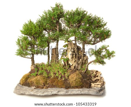 bonsai isolated on white - stock photo