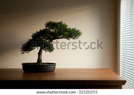 Bonsai on a wooden surface with sunlight shining through horizontal blind.