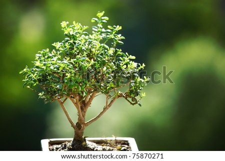 bonsai on green grass - stock photo