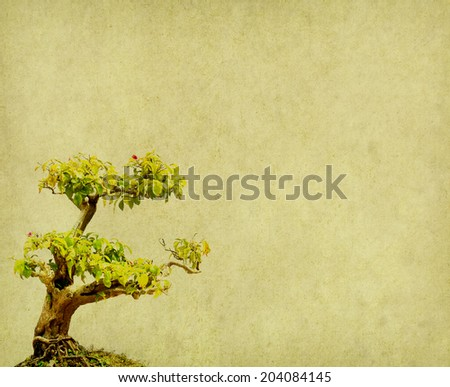 bonsai on old paper background - stock photo