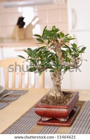 Bonsai on the table - stock photo