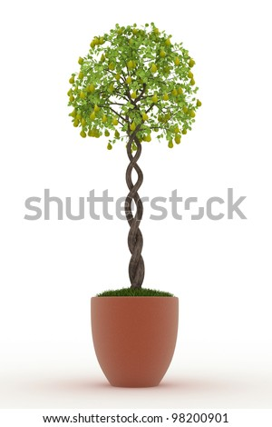 bonsai pear tree in in pot Isolated over white - stock photo